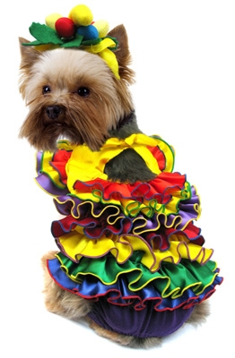 Oh Carmen - Spanish Girl Dog Costume