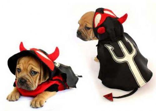 Devil Pitch Fork Dog Costume
