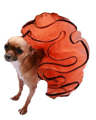 Jack O Lantern Dog Tutu