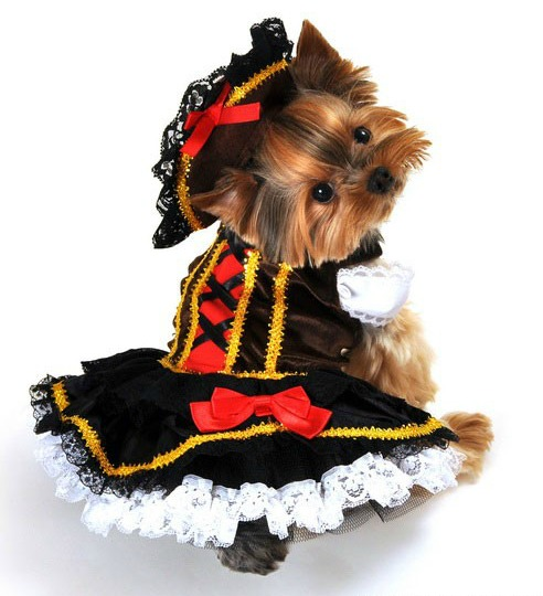 Pirate Wench Girl Halloween Dog Costume