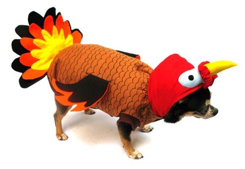 Turkey Thanksgiving Dog Costume