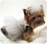 White Wedding Dress Costumes For Dogs