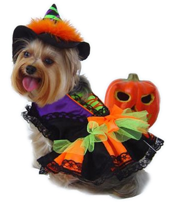 Gwendolyn Witch Dog Costume Tutu Dress