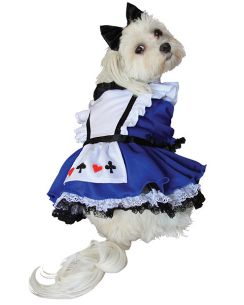 Alice In Wonderland Dog Costume