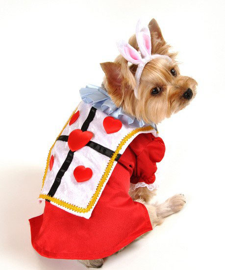 Alice In Wonderland Rabbit Dog Costume