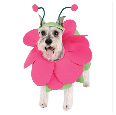 Fiona Flower Dog Halloween Costume