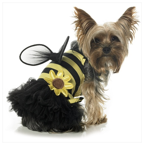 Busy Daisy Bumble Bee Dog Costume