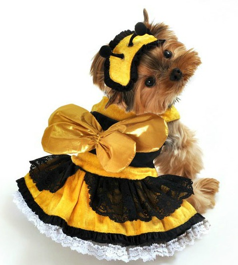 Bumble Bee Dress Dog Costume
