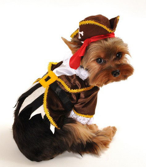 Jack Spawrrow Pirate Caribbean Halloween Dog Costume