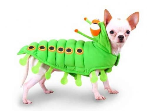 Fuzzy Caterpillar Dog Costume