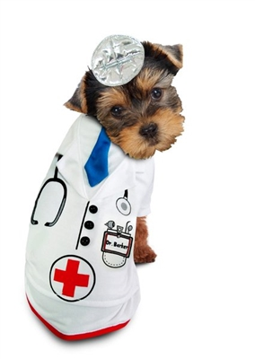Doctor Halloween Dog Costume