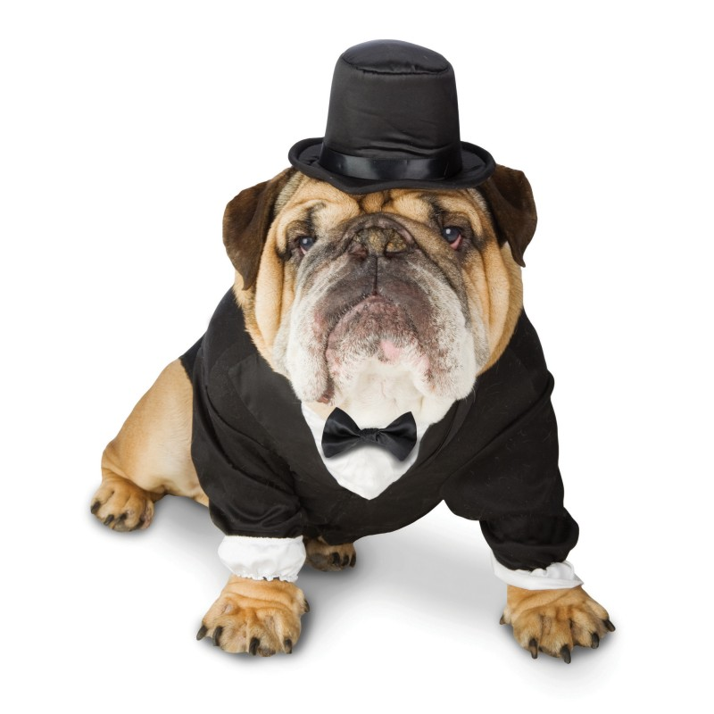 Black Dog Tuxedo With Top Hat
