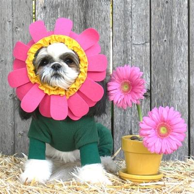 Image result for dog as flower