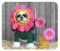 Blooming Flower Dog Costume