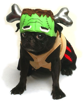 Green Monster Face Dog Costume