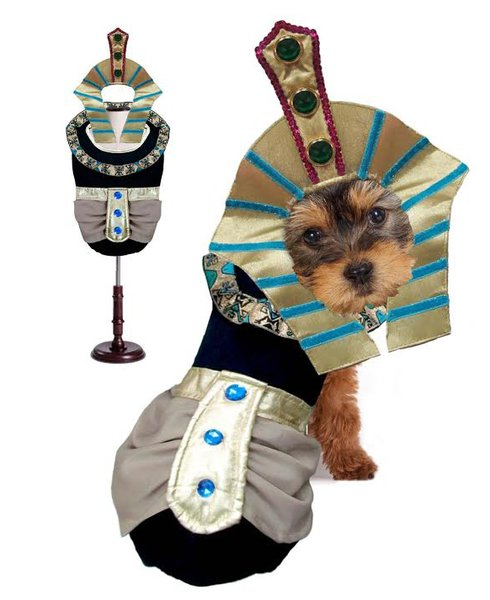 King Tut Halloween Dog Costume
