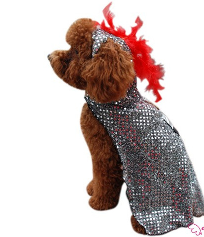 Knight Halloween Dog Costume