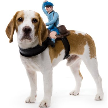 Mailman Halloween Costume For Dogs