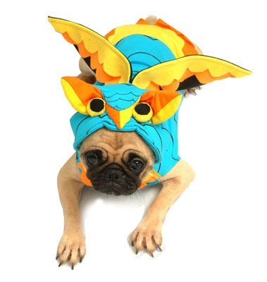 Owl Costume For Dogs
