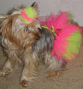 Stella Dog Tutu