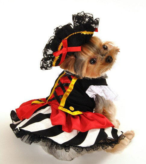 Pirate Caribbean Girl Halloween Dog Costume