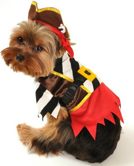 Master Gunner Pirate Halloween Dog Costume