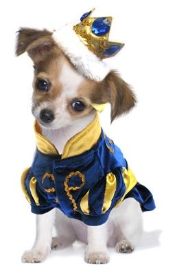 Charming Prince Dog Costume