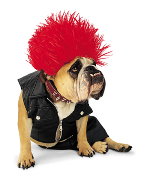Punk Rock Dog Costume