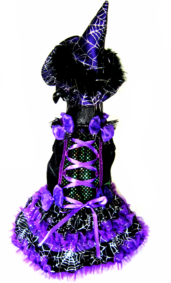 Spiderlicious The Witch LED  Dog Halloween Costume