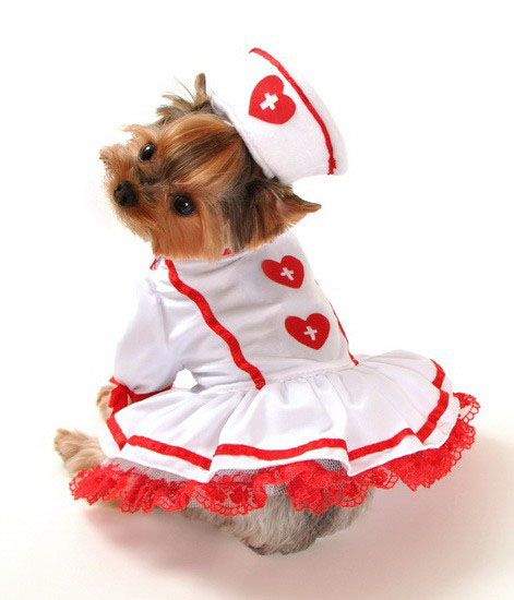 Red and White Nurse Halloween Dog Costume