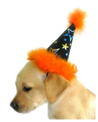 Star Beautiful Dog Costume Party Hat