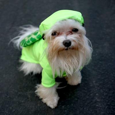 Speedy Turtle Dog Costume