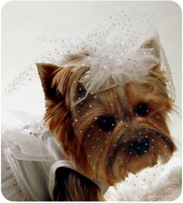 White Sparkly Wedding Veil For Dogs