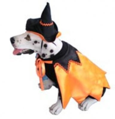 Isador Witch Costume For Dogs