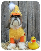 Yellow Duck Dog Costume